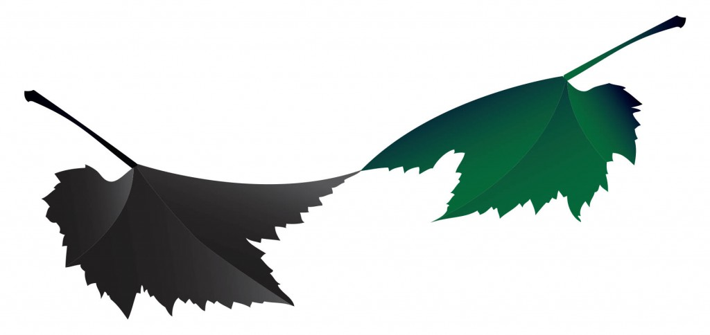 zeleni i crni list 2014